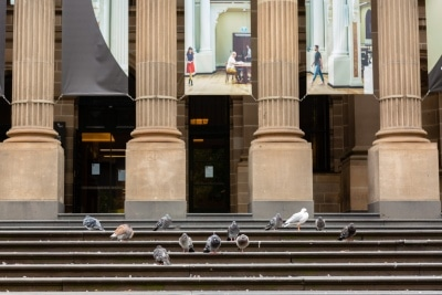 Melbourne, Australia, 12 April, 2020. One of the most popular meeting places in the CBD, The State Library is closed, and its steps empty. Only Pigeons remain during the  COVID-19 Crisis in Melbourne, Phillip Island Circuit, Australia. Credit: Dave Hewison/Alamy Live News