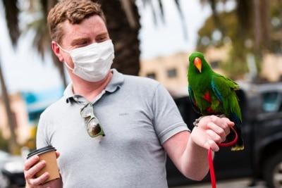 A man is seen with his friendly parrot during the final days of the worlds toughest and longest COVID-19 restrictions in St Kilda.  With 21 days of zero new cases, Premier Daniel Andrews is expected to announce major easing of restrictions, including masks, at his press conference on Sunday.