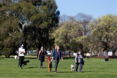 Dog owners in Carlton North are seen together in Princes Park during COVID-19 in Melbourne, Australia. Victoria records 5 new cases and three deaths as restrictions are slightly eased. This comes just days after Health Minister Jenny Mikakos resigned over the Hotel Quarantine bungle and as pressure mounts for the Premier, Daniel Andrews, to resign. As the Spring weather sees warmer days, more Melbournians are simply ignoring the rules.