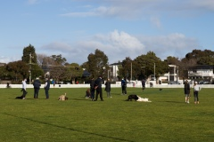 Locals are seen walking their dogs in a park in Brighton during COVID-19 in Melbourne, Australia.  Premier Daniel Andrews announced today that he may release plans to open up the state next Sunday amid speculation that Stage 4 restrictions will be extended.