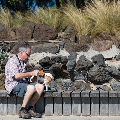A man is seen grooming his small dog during COVID-19 in St Kilda Beach, Australia. Despite desperate attempts by the Premier to renew his COVID fear, thousands of Melbournians enjoy the sun at St Kilda Beach. A total of only 39 active cases currently exist in Victoria, despite this, Victorians currently in Queensland and NSW are being prevented from coming home. Zero new cases were discovered in Victoria today.  during COVID-19 in Victoria, Australia. Despite desperate attempts by the Premier to renew his COVID fear, thousands of Melbournians enjoy the sun at St Kilda Beach. A total of only 39 active cases currently exist in Victoria, despite this, Victorians currently in Queensland and NSW are being prevented from coming home. Zero new cases were discovered in Victoria today.